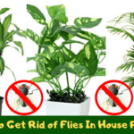 rid of flies in house plants naturally